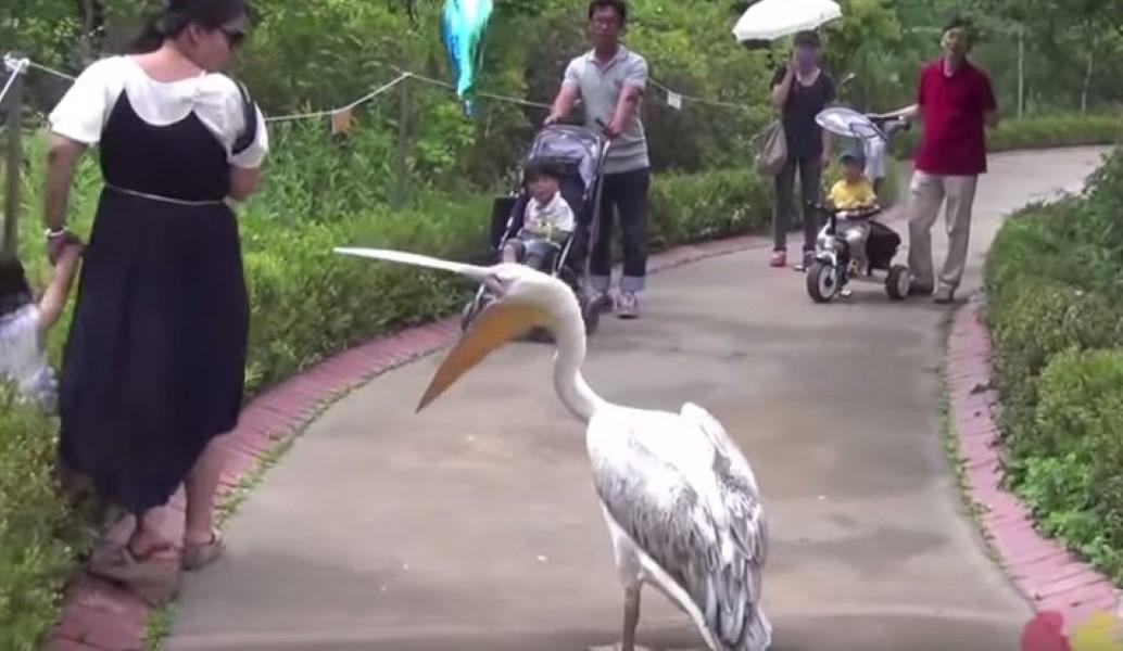 Les Pelicans fêtent l'arrivée de DeMarcus Cousins façon thug life