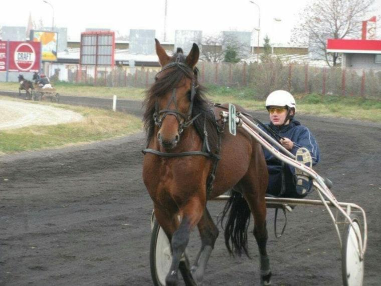 Nikola Jokic a arrêté le basket parce qu'il préférait les courses de chevaux